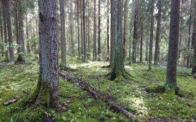 Stiftelsen för Naturarvet – Barnens Skog